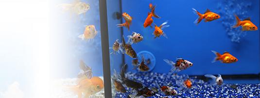 poisson vente en ligne aquarium