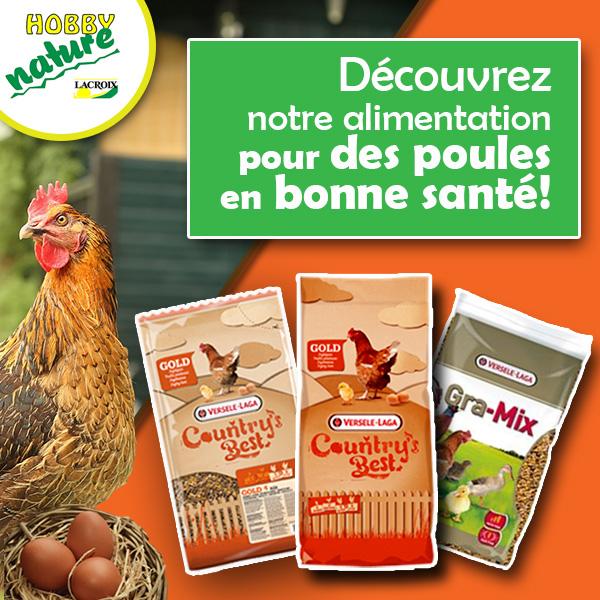 Découvrez toute notre gamme d'alimentation pour vos poules !